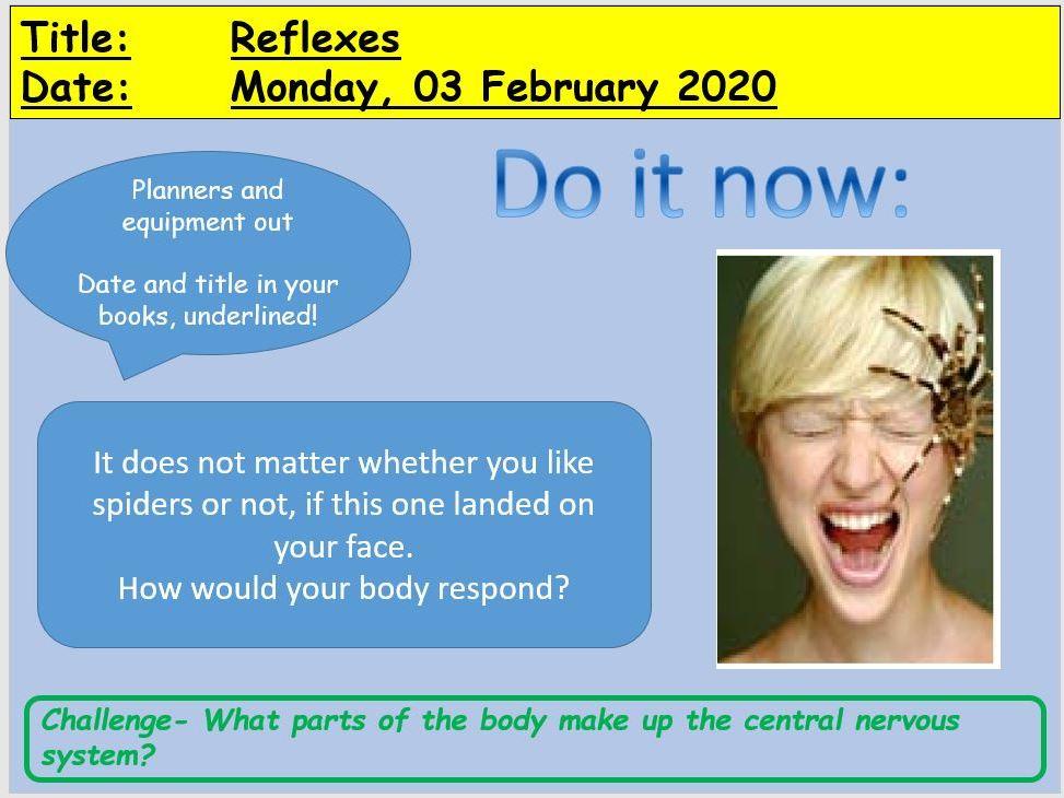 GCSE - Reflexes