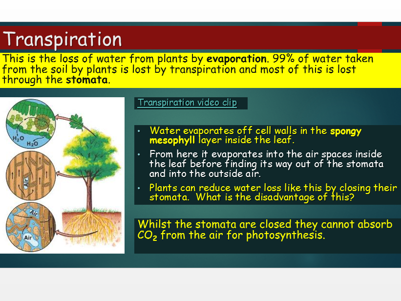 OCR A Level Biology (H020) - Module 3 - Plant transport -Transpiration