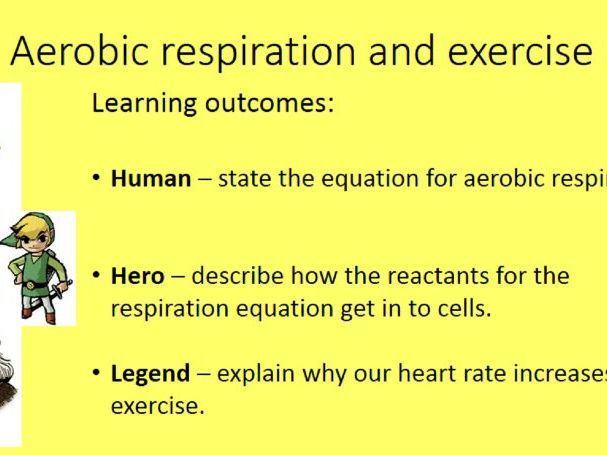 NEW AQA (8461) Aerobic Respiration and Exercise Lesson