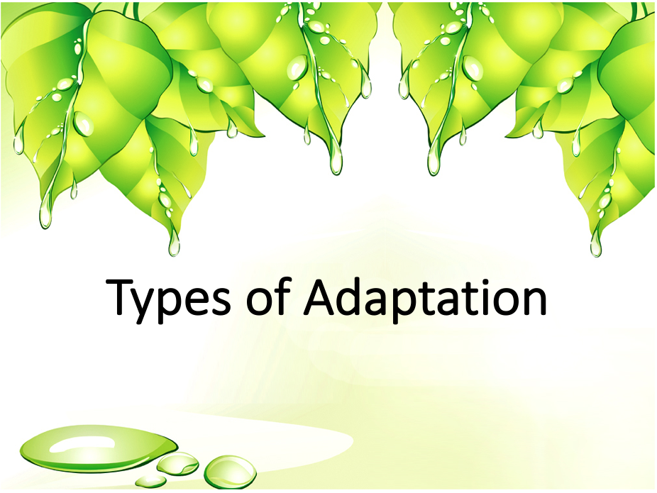 Types of Adaptation