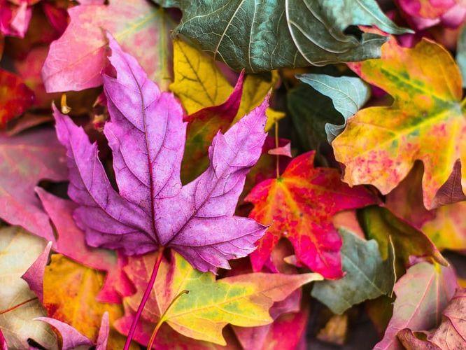 Autumn Photo Display Banner