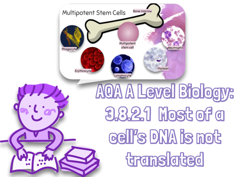 NEW AQA A Level Biology 3.8.2.1 Most of a cell's DNA is not translated