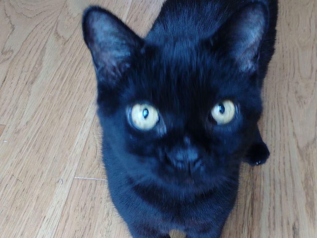 CLEO CAT STORIES