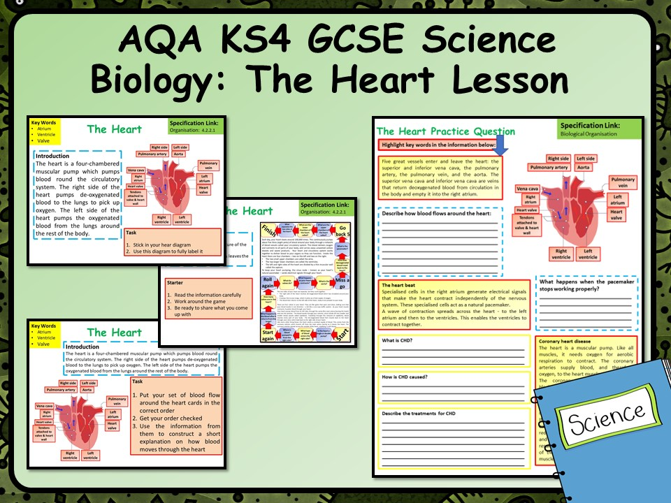 KS4 AQA GCSE Biology (Science) The Heart Lesson & Activities | Teaching Resources