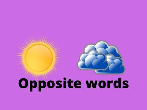 Opposite words-Worksheet