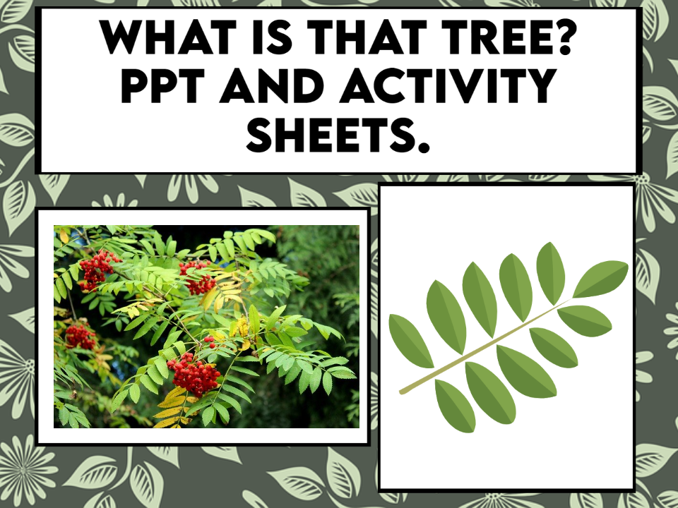 What is that Tree? PPT and Activity Sheets