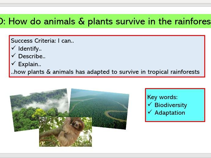 L2 . Plants & Animals in the Rainforest