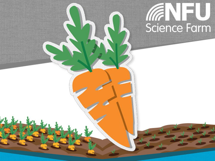 My Carrot Diary - A guide to growing carrots in the classroom