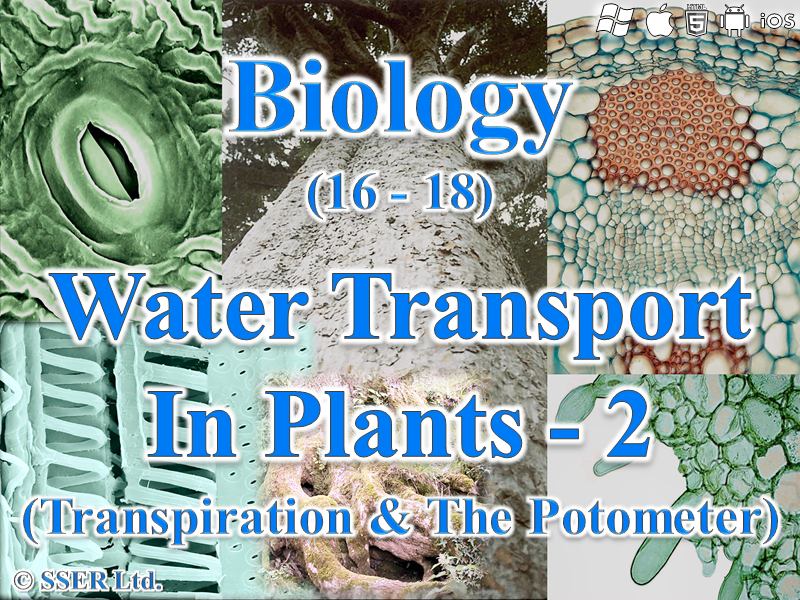 3.3.4.2 Water Transport in Plants - 2 (Transpiration & The Potometer)
