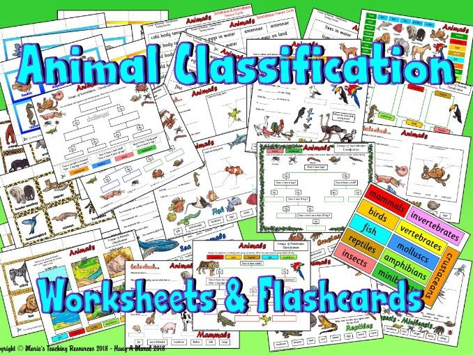 Animal Classification – Sorting Activity and Worksheets