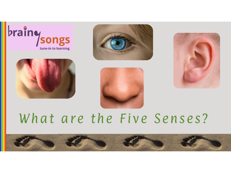 THE FIVE SENSES for Year 1