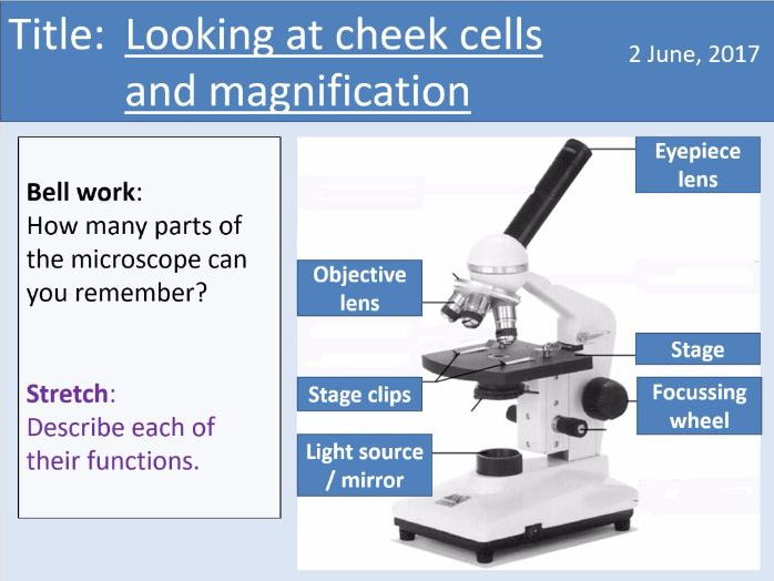 Year 7 Cells lesson 4 - Cheek cells practical and magnification
