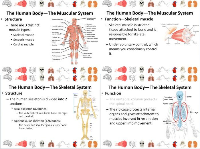 Muscular and Skeletal Systems Slide Show