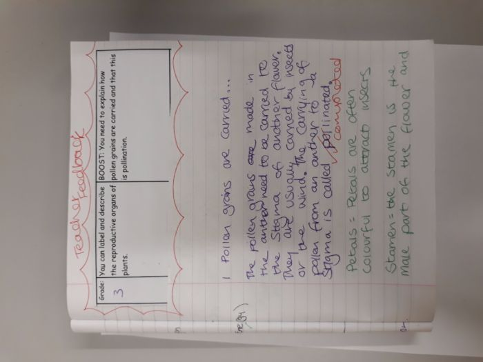 Marking Form with Comments - Combustion KS3