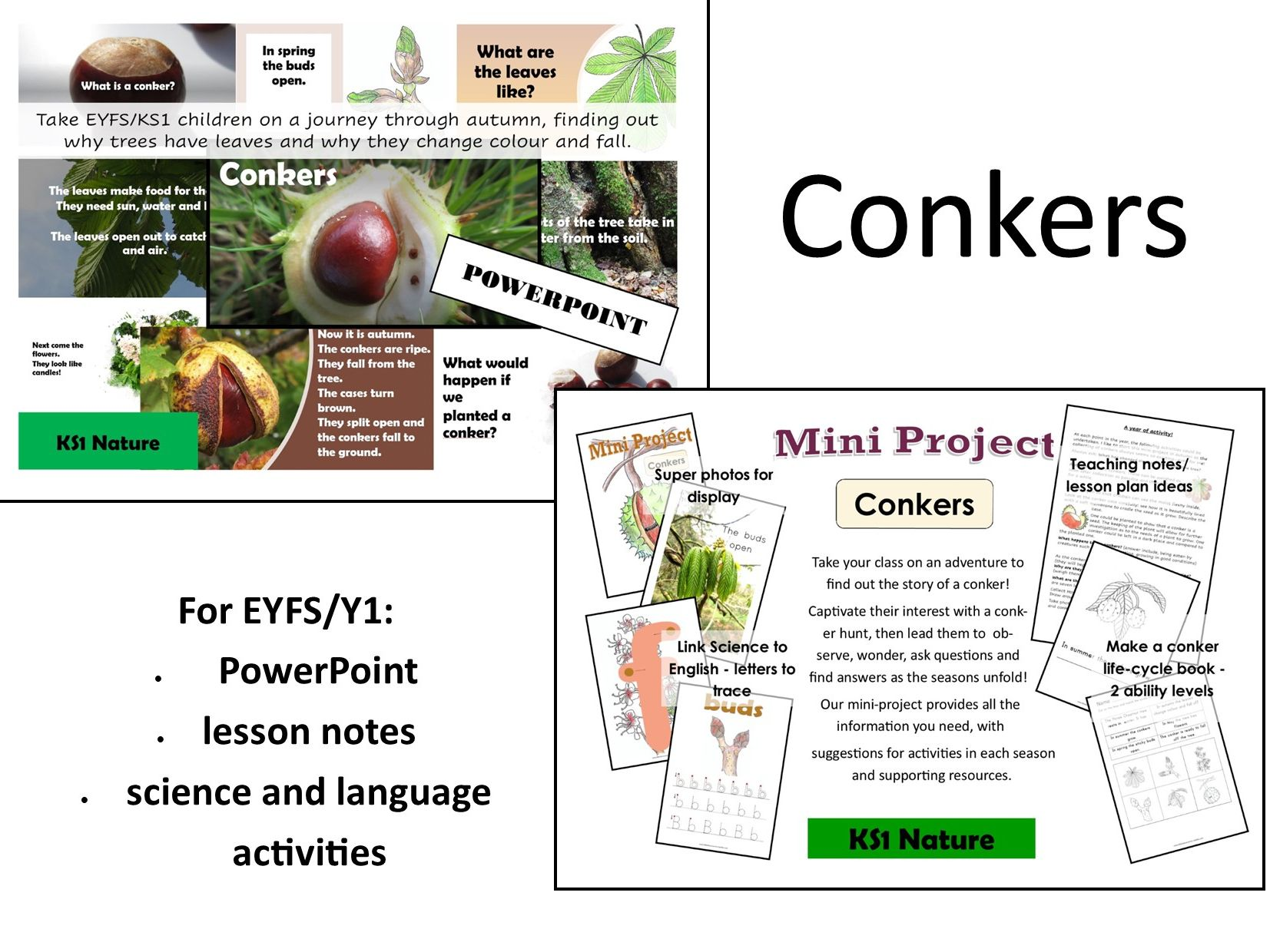 Conkers Lesson Notes and PowerPoint