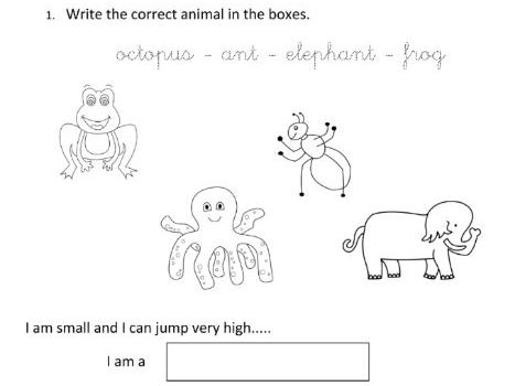 Guess which animal for Year 1 students