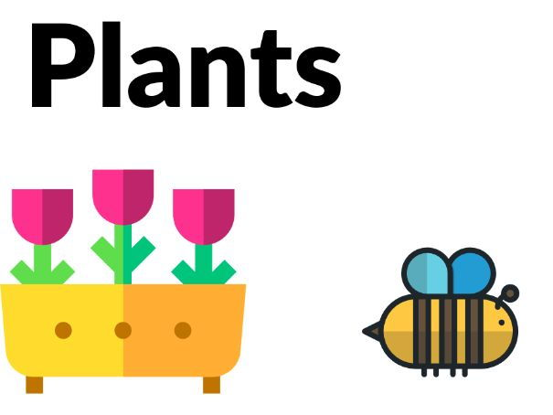 Plants - Photosynthesis, structure and growing! [Years 3, 4, 5]