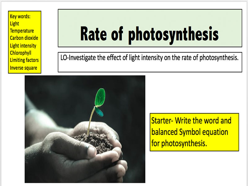 to investigate the effect of light intensity on the rate of photosynthesis As you rise from low light intensity to higher light intensity, the rate of photosynthesis will increase i hope that you continue to investigate this as the.