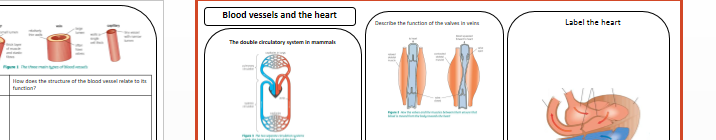 Heart, blood and blood vessels revision GCSE AQA 1-9 NEW SPEC B2