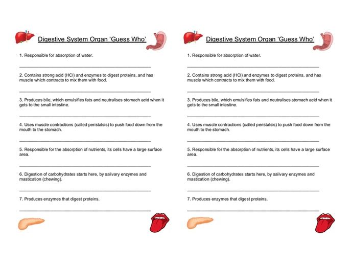 Digestive System Organ 'Guess Who' Worksheet