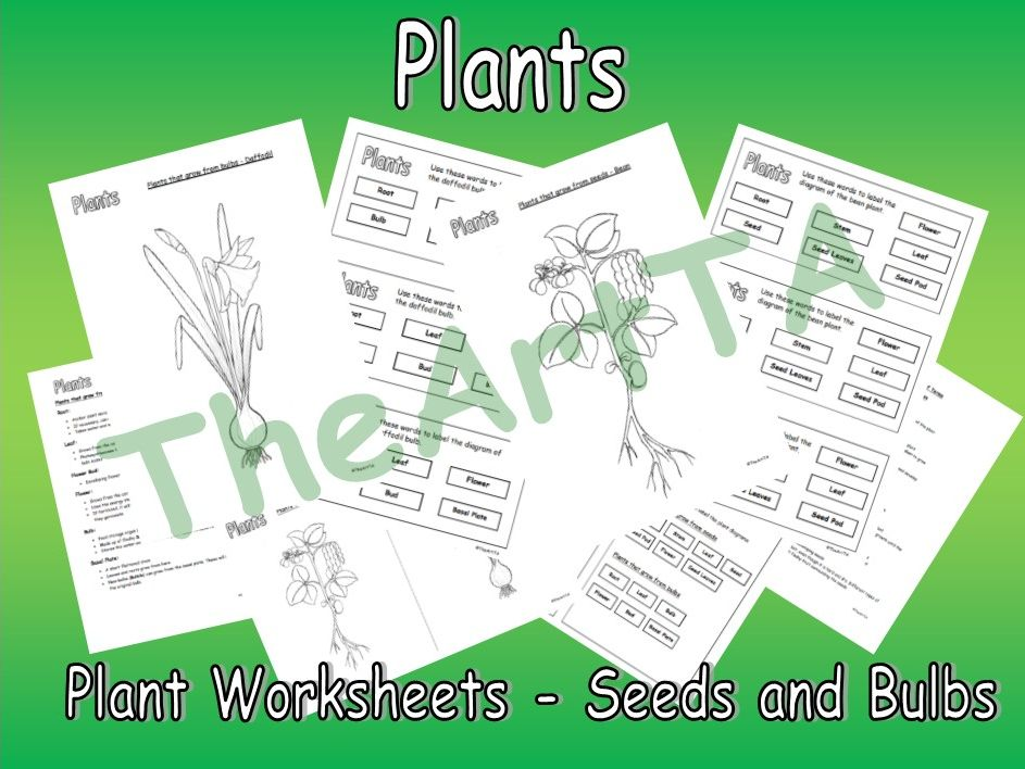 Plants from Seeds and Bulbs - Worksheets