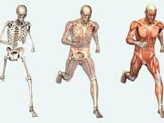 AQA Applied Science Unit 4 The Human Body