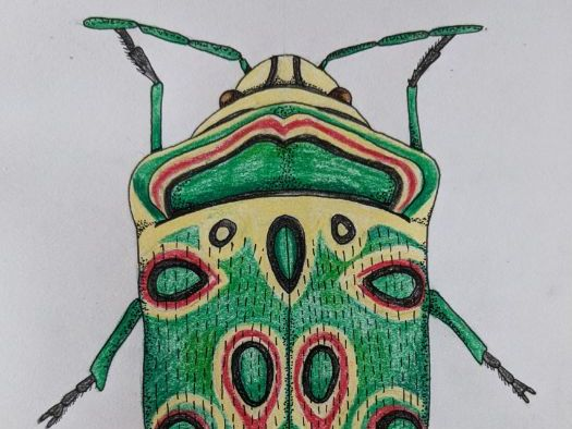 Insects and Scientific Illustration