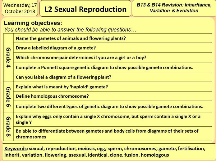 L2 Sexual reproduction and X and Y chromosomes