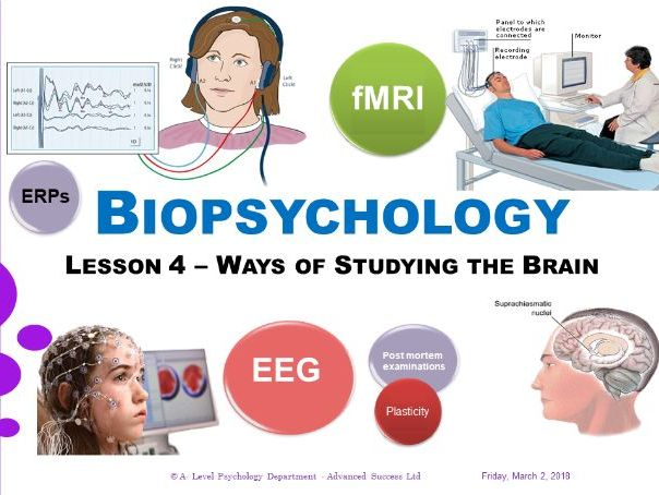 Powerpoint - Biopsychology - Week 4 - Ways of Studying the Brain