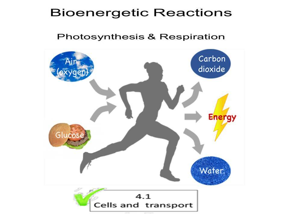 Bioenergetics   and Transport Bundle