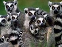 Key Stage 3; rainforest decision making exercise - Madagascar
