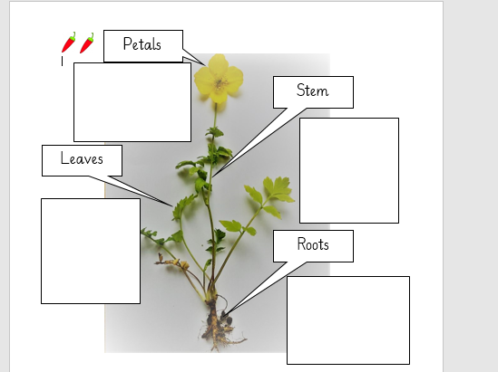 Labelling parts of a plant - Science