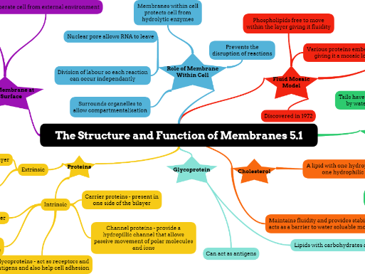 OCR A level Biology Chapter 5 Plasma membranes
