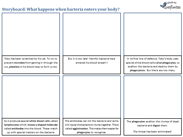 Storyboard: What happens when bacteria enter your body?