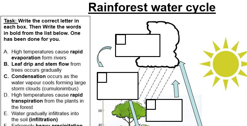 how to draw the tropical rainforest
