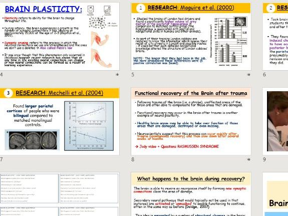 A-Level Psychology - Neural Plasticity (Biopsychology topic)