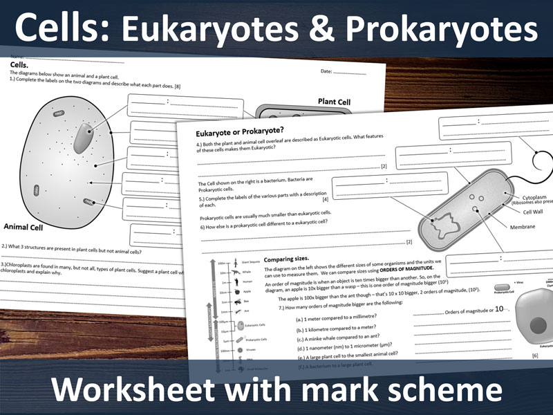 GCSE Cells - Eukaryote & Prokaryote structure and scale.