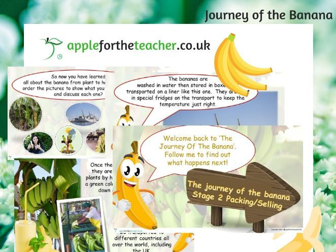 Journey Of A Banana Activity Bundle