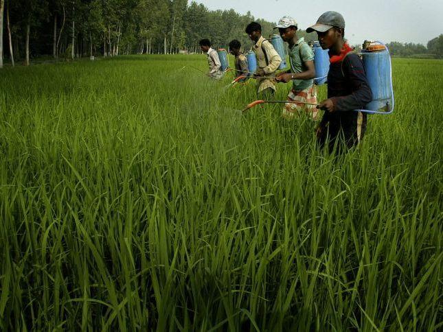 Improving subsistence farming & Green Revolution