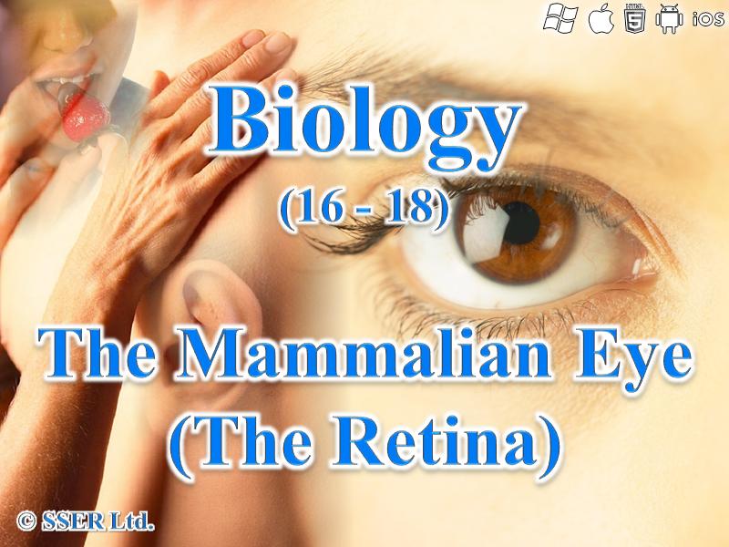 9.7 The Eye (Retina)