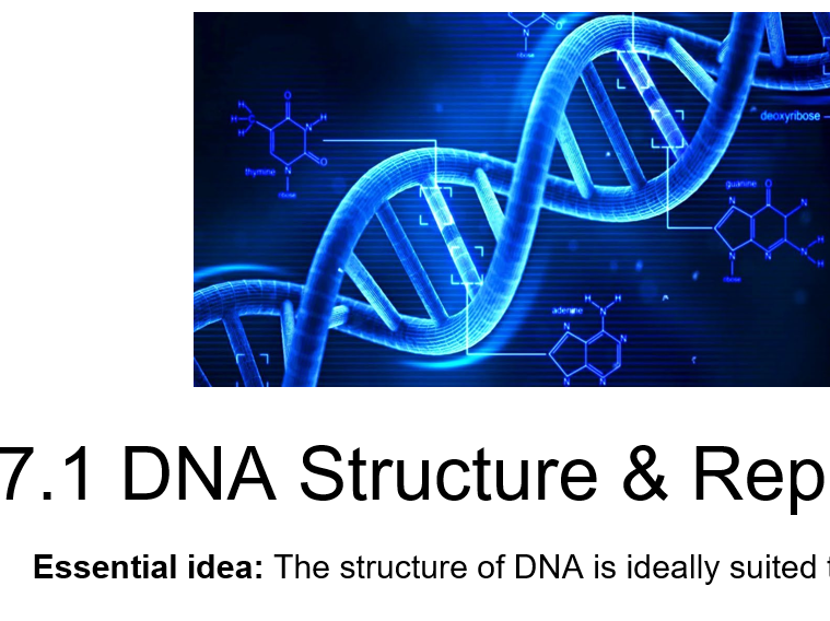 IB Biology - 7. Nucleic Acids - PowerPoint Presentations