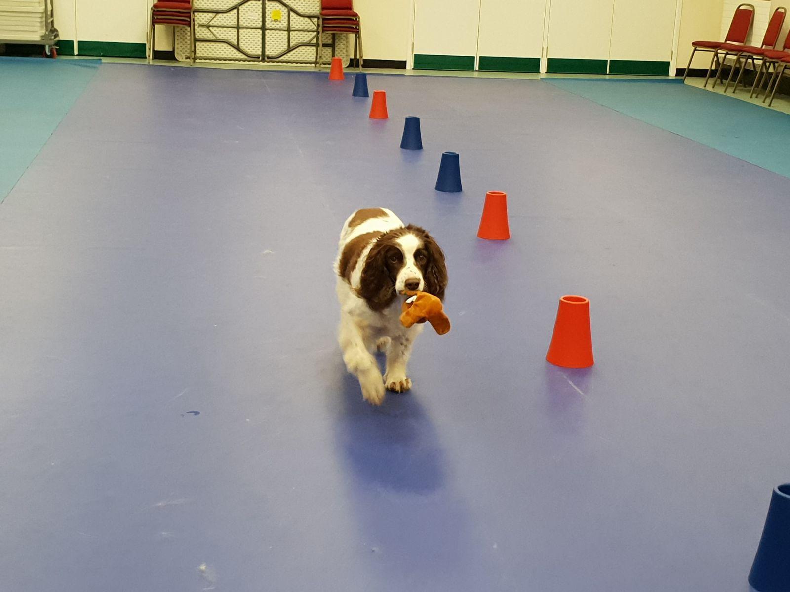BTEC Animal Care Unit 3