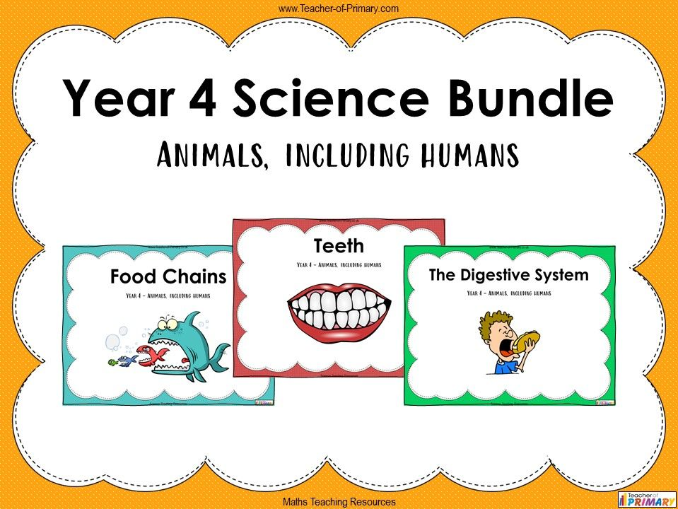 Year 4 Science Bundle: Animals, including humans