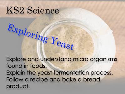 KS 2 Science Exploring yeast