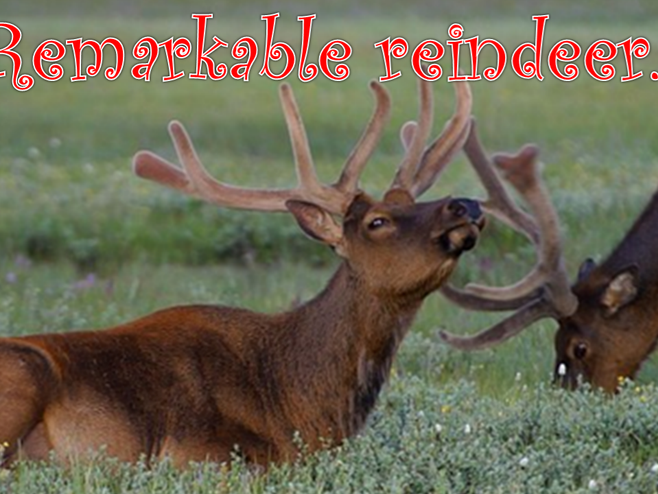 KS2 Reindeer Geography/Science focused Powerpoint lesson