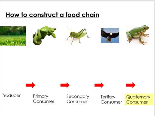 KS3 Lesson 1 - Food Chains Interdependence