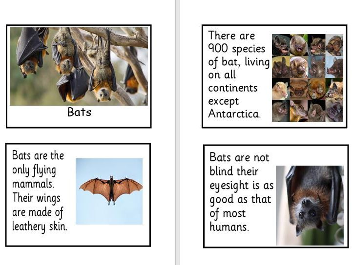 Nocturnal Animal fact cards