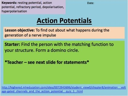 Biology Action Potentials A-Level - Outstanding Lesson