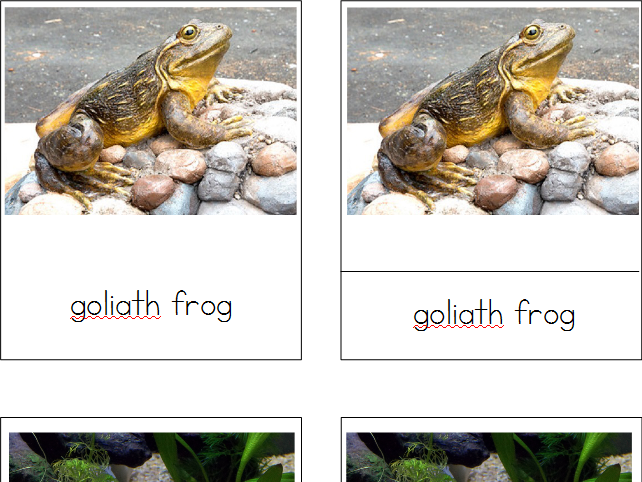 Amphibians 3-Part Cards