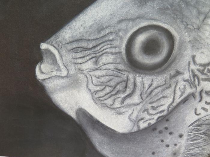 Charcoal and chalk Marine fish